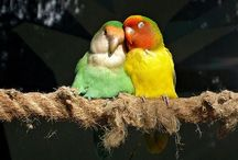 Unconditional animal love