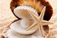 shell...