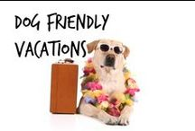 ☘ Dog Friendly Vacations
