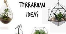 ☘ Terrarium Ideas