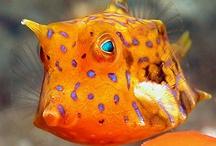 The Life Aquatic. / by Lauren Mmmmmmm