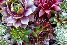 Succulents / I love the different colors and textures that succulents provide. So many options and modern containers to choose from. I've used many in my designs. Www.calladesign.net #succulents #plants #moderndesign #saltlakecity #interiordesign / by Calla Design