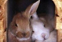 Rabbits / by Mary Walls