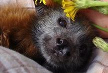 Just a Little Batty / I adore bats. They are so misunderstood and do so much good in the world. Everyone needs to take another look at how beautiful and adorable they are. / by Kimberly Martin