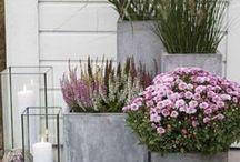 Hallo Herbst! Auf dem Balkon und im Garten / Auch im Herbst kann man seinen Garten hübsch dekorieren mit Pflanzen, die der kalten Jahreszeit trotzen. Und da geht mehr als der übliche Zierkürbis.