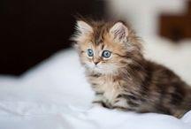 Cute Kittens /