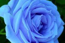 Anything Blue