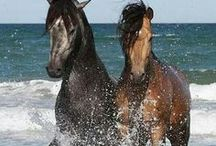 Beautiful Horses  / by Suzanne Seguin