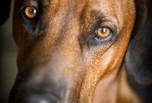 i miss my dog xd