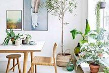 Nature / Wohnen ohne Pflanzen ist zwar möglich, aber sinnlos!