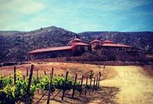Valle de Guadalupe / Baja's wine country.