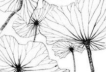 Draw (botanical)