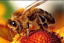 Bijen / Bees / Bijen