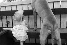 Hundhundhundhundhundhund