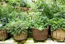 Back Door Herbs / Easy ways to keep your herbs growing right next to your kitchen.