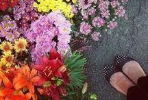#ÇiçekAçtı Yarışma fotoğrafları / Yarışmamıza katılan fotoğrafların bir kısmından derlemedir.