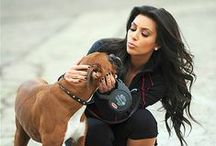 Celebrity Dogs / Many celebrities rely on their trusty four-legged friends for company