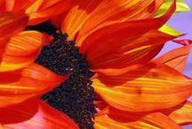 """⊰✿✿⊱Flowers ⊰✿✿⊱ / """"Le cose sono unite da legami invisibili. Non puoi cogliere un fiore senza muovere una stella."""" - Galileo Galilei"""