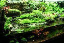 Aquariums - Turtle tanks