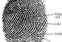 CSI / forensics / crime story reference / Inspiration for CSI-ish rpg stuff.