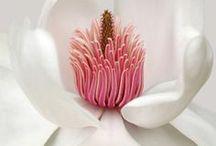 Flowers / by Corrie Wittebrood