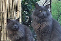 My lovers cats