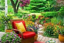 trädgård och växter.