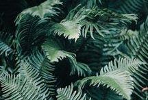 botanical / by sophia