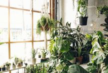 living with green plants