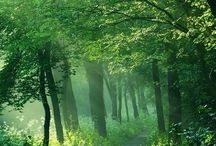 forest / my favorite place
