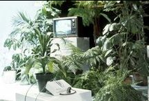 l o g a n s r u n / brave new world adventures with plants