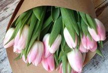Tavasz, virágok, kertek