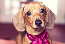 Dogs / A cute collection of dog pics, quotes and of course, SunFrog Shirts. #sunfrogshirts