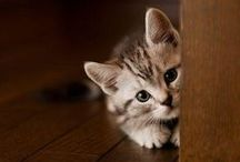 Cats / A cute collection of cat pics, quotes and of course, SunFrog Shirts. #sunfrogshirts