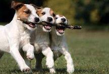 Yndlingshunde / Når jeg får hund...