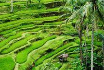indonesia / Bali, Ubud,