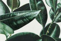 tropic∆l pattern & leaves