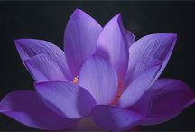 LoTuS & WaTeR LiLY / by Audrey C. Braun