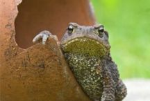 GNoMeS, TOaDS & Their DWeLLiNGS /      / by Audrey C. Braun