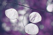 Autumn Moods / Inspiraatiovärit violetti, pinkki ja musta.