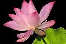 Flowers / Flores, alegram a vida.
