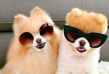 Cute ~  Animal friends! / Imagine these cute animals wear your glasses... Take  moment to smile~