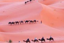 VIVA MAROC! / Everything Morocco I love