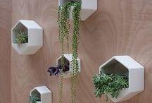 Cactus, Suculentas & Macetas ♡