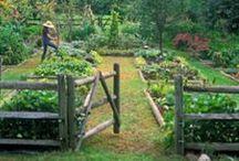 Garden Life / Growing things.