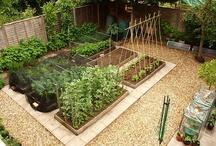 Jardin / Garden / by Fastoche LaPoloche