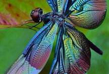 Natural World / Beautiful and incredible images from the world of nature