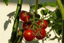 Gemüse & Naschen / Die Pinnwand zum Balkonblog ''Gemüse & Naschen''