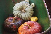 Colori e profumi dell'autunno