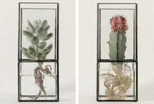 GARDEN & PLANTS  DIY-  Jardin y plantas